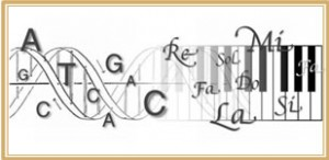 Le rôle du SON dans l'Activation de l'ADN